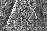 Under a magnification of 180x, this scanning elect