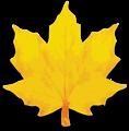 M Leaf 02