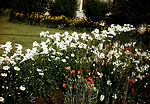 This historic image depicted a beautiful garden on