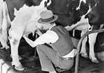 This historic 1932 photograph showed a veterinaria