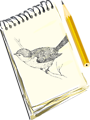 Sketchpad, with drawing of a bird