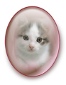 Cat in Mirror