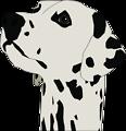 dalmatin head