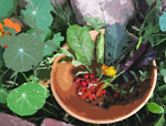 A bowl of flowers, berries and greens