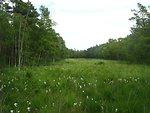Deutsch:  Das Dänschenburger Moor ist eines der größten Hochmoore Norddeutschlands. Durch Wasserabsenkung ist das Moor inzwischen fast vollständig mit Kiefern und Birken bewaldet. Der baumlose Streifen auf dem Foto ist die freigehaltene Schußschneise
