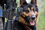 Brave Defender training goes to dogs