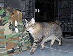 Supply unit uses 'military working cat' to control critters