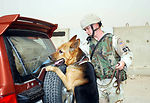 Military working dogs:  More than man's best friend