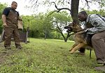 Canine Boot Camp: Instructors bark orders, recruits respond in kind