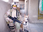 Tinker canine dies while on patrol in Iraq