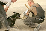 Total Force MWD training