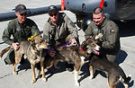 Rescuers go to the dogs