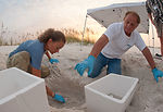 Turtle Eggs avoid Gulf Oil Danger