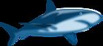 Shark Shaded