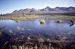 Pond along Denali Highway