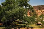 A large tree creates some shade from the Arizona sun in a valley with the Agua Fria River.