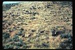 Antelope  Wildlife  LSRD  Lower Snake River District