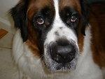 A dog belonging to Joe named Jamestown.