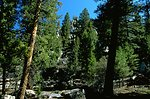 Rock formation and tall trees