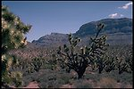 Desert vegetation in the form of cacti and trees.
