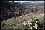 A Prickly Pear cactus and a valley in the Agua Fria National Monument.