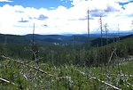 View of a valley and downed trees in the Judith Mountains