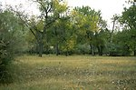 Cottonwood trees and grass at Howrey Island Recreation Area