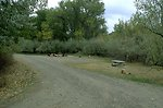 Picnic area at Howrey Island Recreation Area along the Yellowstone River