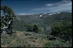 Big Indian Gorge, a glacial valley, on Steens Mountain.  View to the East up the Canyon.
