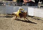 Wild Horse/w Rider