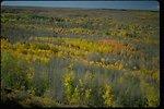 "Fall Colors""...Aspen along Fish Creek at Steens Mountain, Oregon."
