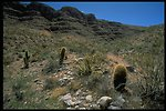 Cacti and other desert plants growing alongside a road in the Grand Canyon-Parshant National Monument.