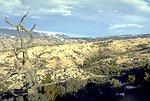 Pryor Mountain horse range in summer