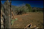 A old fence with cacti and Palo Verde trees growing next to it.