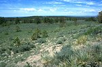 Sagebrush and ponderosa pine trees in the Shepherd Recreation Area
