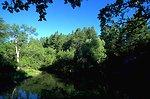 Frog Pond on Cattle Creek