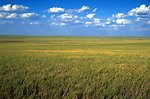 Grassland 40 miles north of Belle Fourche