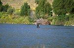 Fisherman in Madison River