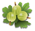 green gooseberrys