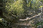 Creekbed in Centennial Mountains