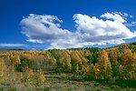 Aspens at Fish Creek, Steen's Mountain.