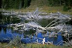 Brush in a  Pond in the Axolotl Lakes Wilderness Study Area