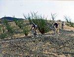 Mountain bikers racing in the desert