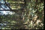 Bench above Lower Juniper.  Vegetation: Pinpon, Quekeg, and Berqua.