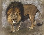 Deutsch:  Schreitender Löwe. Gouache/Pastell auf Karton. 43 x 53,5 cm.Rechts unten signiert.