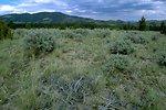 Sagebrush field
