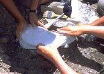 Paleontologist preparing a cast for a dinosaur bone, Lance Creek Fossil Area, Newcastle Field Office.
