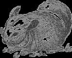 grayscale chinchilla