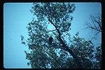 Bald Eagle  Wildlife  USRD  Upper Snake River District