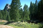 Cows grazing in the Humbug Spires Wilderness Study Area